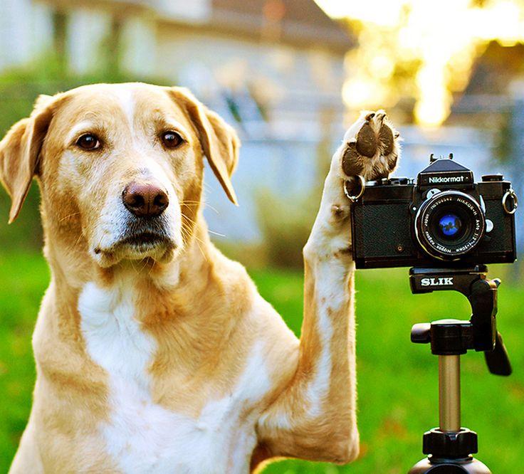 Dingo Rawhide Bones Good For Dogs