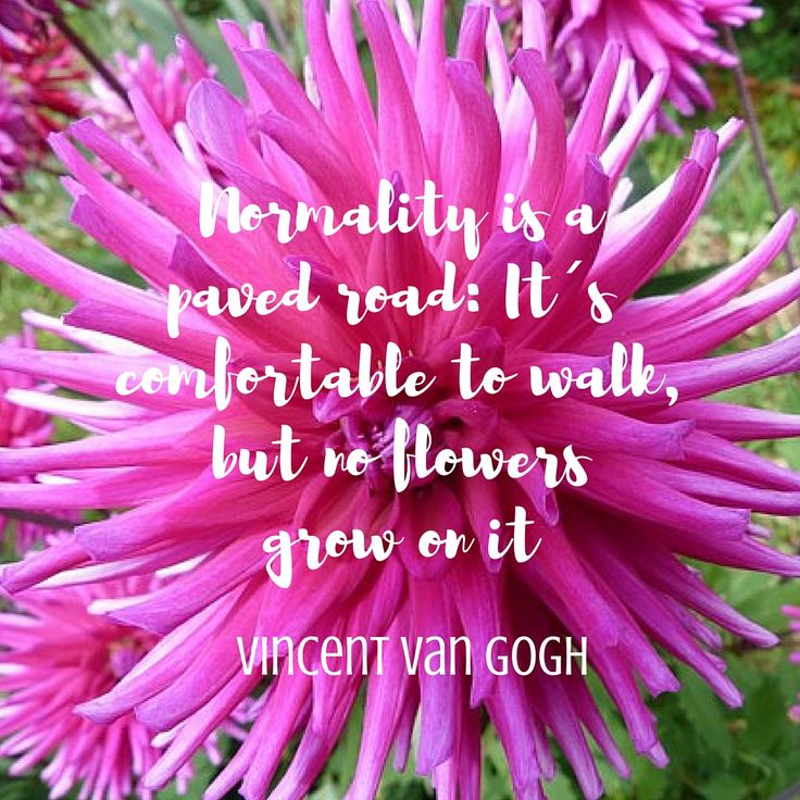 Normality is a paved road: It´s confortable to walk, but no flowers grow on it - Vincent Van Gogh