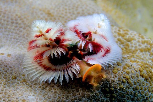 The 6 Basic Invertebrate Groups: Segmented Worms