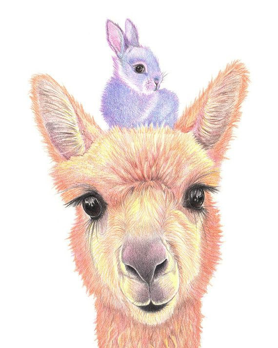 Alpaca Baby Rabbit Color Pencil Drawing Nursery By