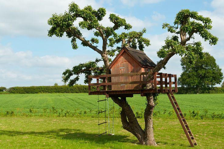 Dům v korunách stromů.