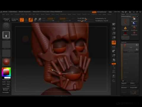 Zbrush - Anatomy of the Face