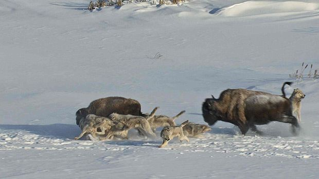 Frozen Pictures | Frozen Planet: pictures from Sir David Attenborough's latest polar TV ...