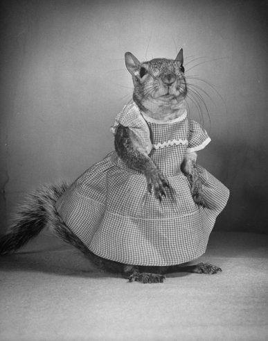 Squirrel!!Nina Leen, Dresses Up, Paper Dresses, Bridal Parties Dresses, Fashion Plates, Life Magazines, Tommy Tucker, Dolls Dresses, Magazines Covers