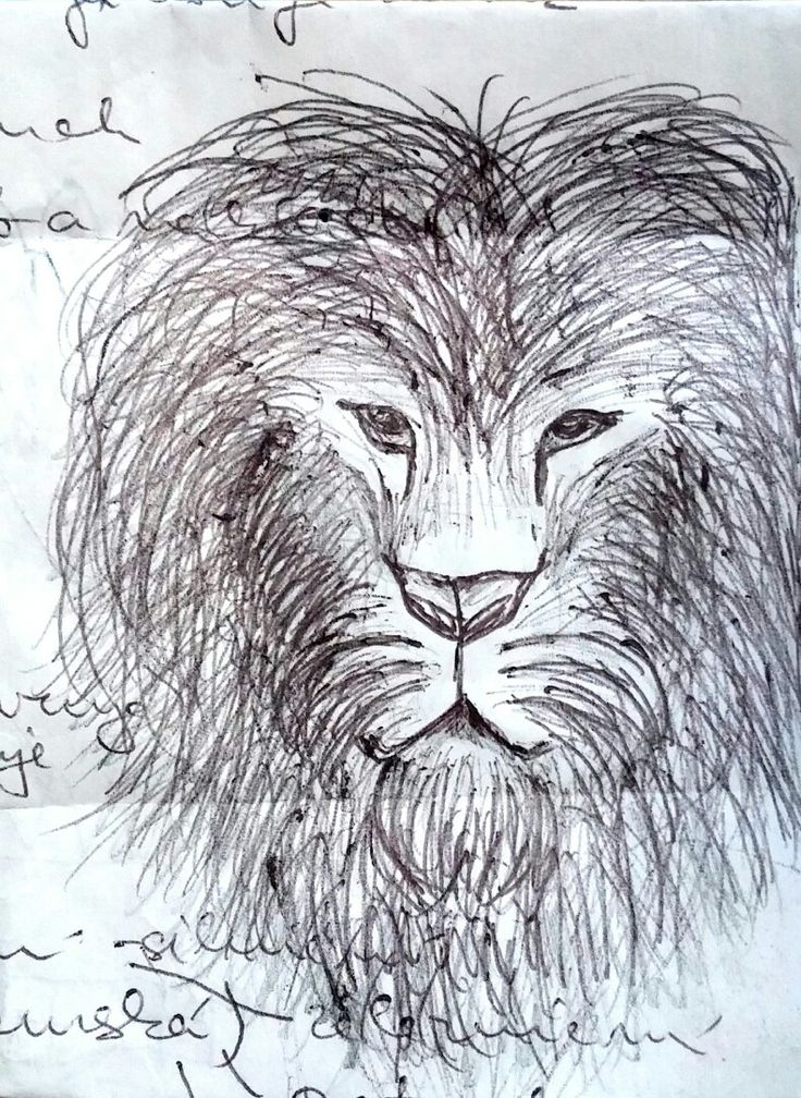 Lion. Dominika Bartoňová