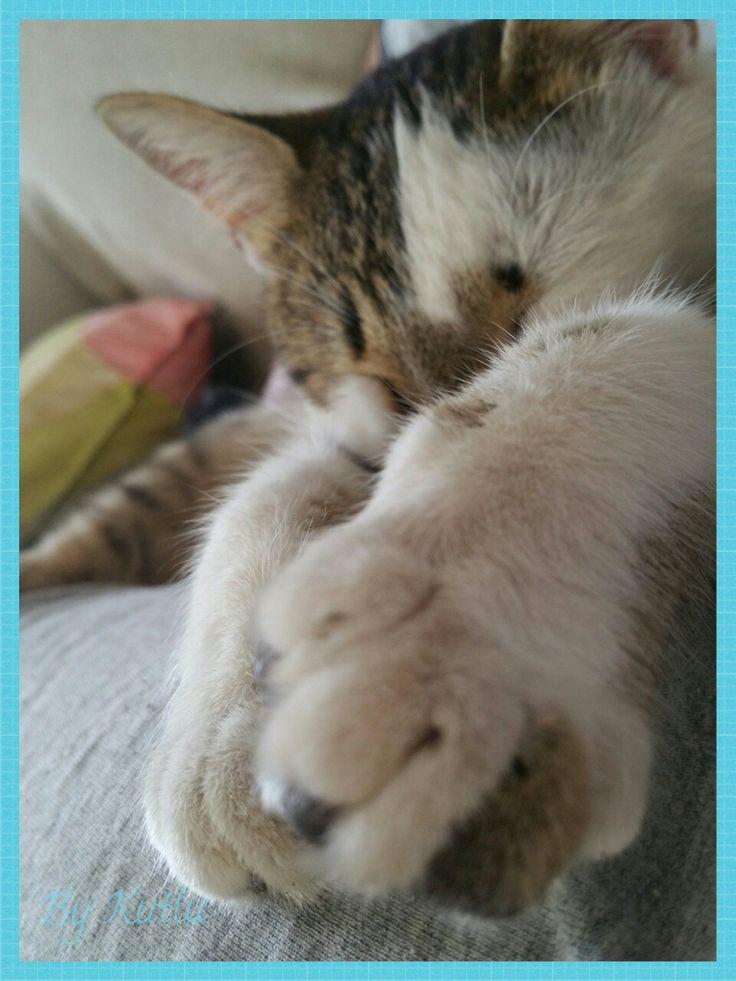 Patilerine kurban olurum! 😉 Dün Sukkulentlerimi henüz dağıttığını görmeden önce kucağımda uyurken çekmişim bu pozu! 😉😊💙 Ne yaparlarsa yapsınlar seviyorum kedileri! 💙 Kedi sevgisi böyle bir şey işte! 😉😂 #kedi #çiço #evimizden #kedipatisi