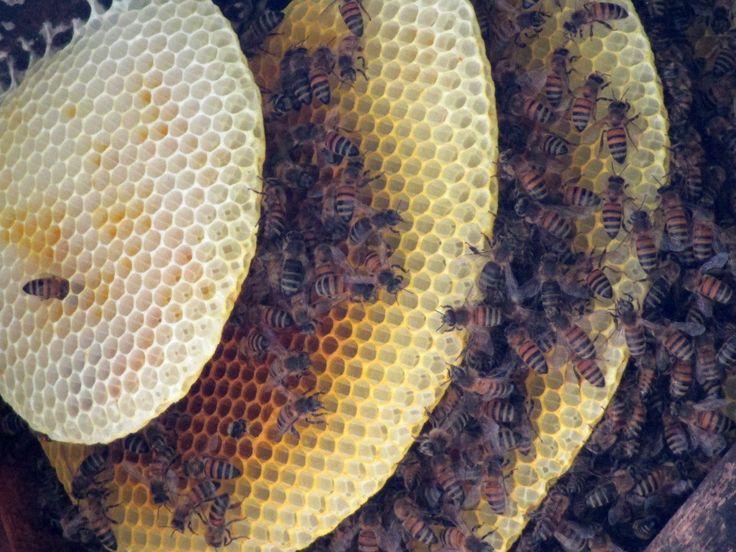 """...En los Estados Unidos de Norteamérica, en la NASA , hay un poster muy lindo de una abeja, el cual dice así: """"Aerodinámicamente, el cuerpo de una abeja no está hecho para volar; lo bueno es que la abeja no lo sabe""""..."""