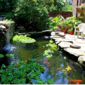 35 curated aquarium and koi ponds ideas by tbritt48 for Koi pool water gardens thornton