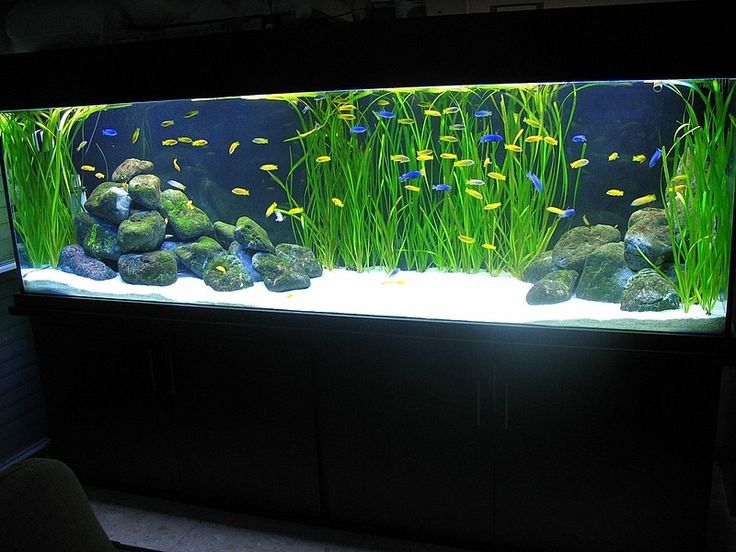 another cool cichlid tank