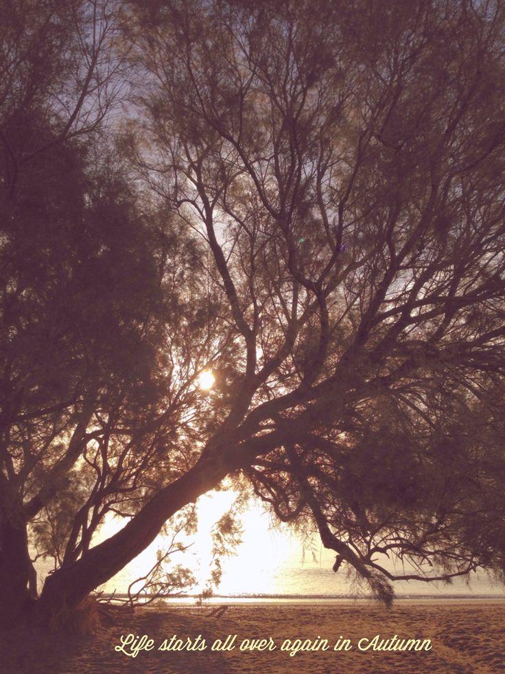 Autumn | Days of Bliss 365