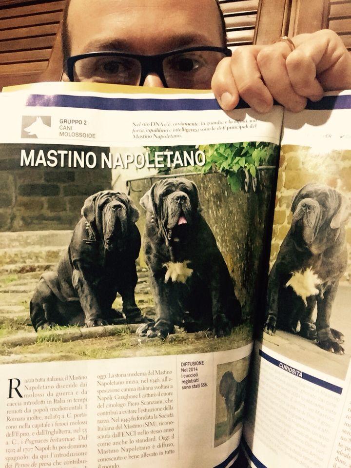 """I Mastini """"di Fossombrone"""" sulla rivista """"Tutte le razze"""", edita da Sprea. Foto di Marco Leonardi. #Mastini #FOSteam"""