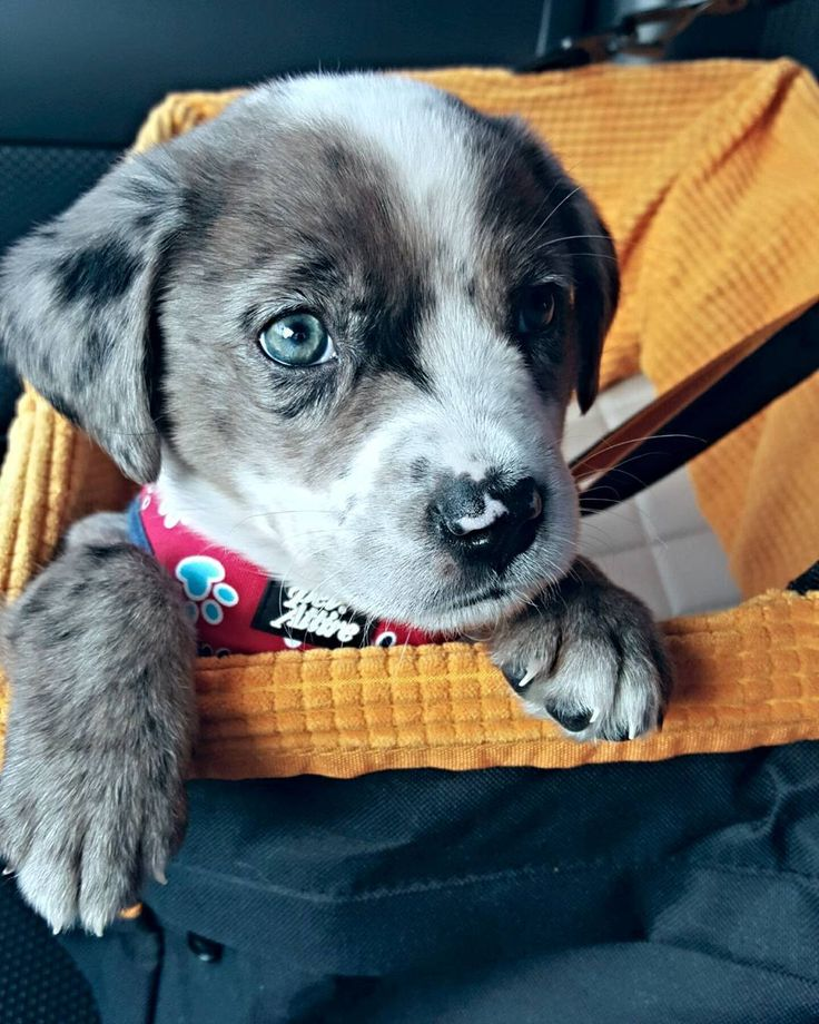Top 20 Low Energy Dog Breeds | Canna-Pet®