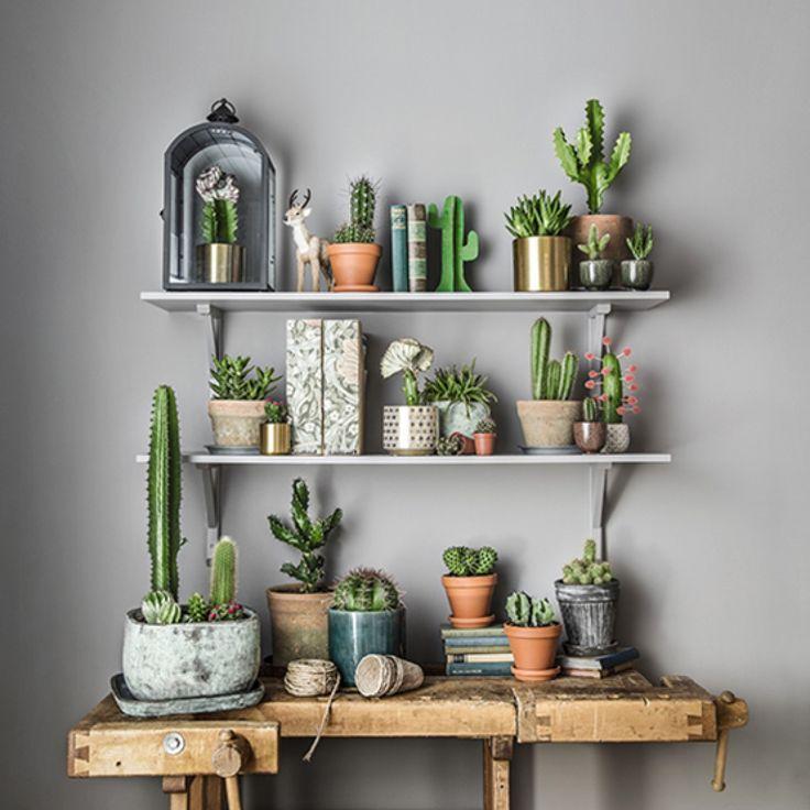 Kaktus - mycket mer än bara taggar
