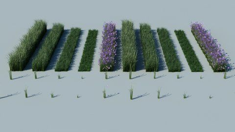 3DS Max VRay Grass BY James Shaw