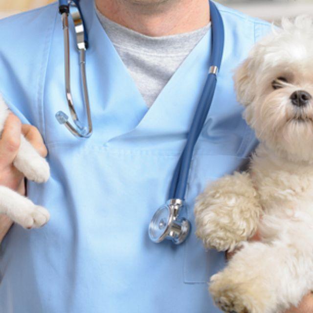 5 اسئلة يجب ان تسألها إلى طبيبك البيطري اليوم