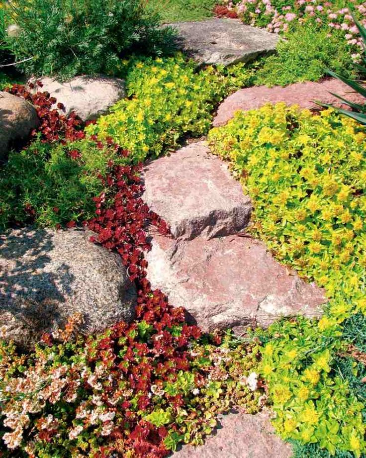 Fesselnd Steingarten Grosse Felsen Bodendecker Farbe