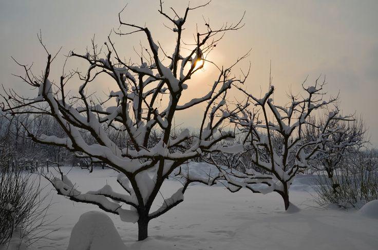 Tramonto tra la neve by Giovanni Frenda