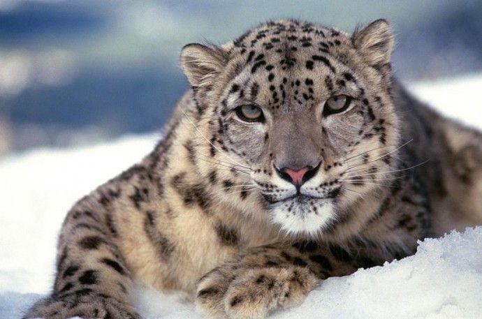 Самые редкие животные на Земле | Colors.life