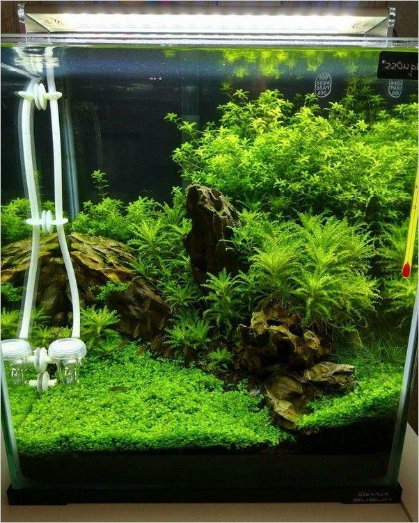 Pin On Fish Tank Design Ideas