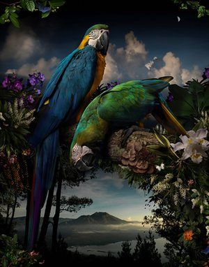 The winner of the Bowness Photography Prize 2015, titled Florilegium#1 (2014), by Joseph McGlennon.