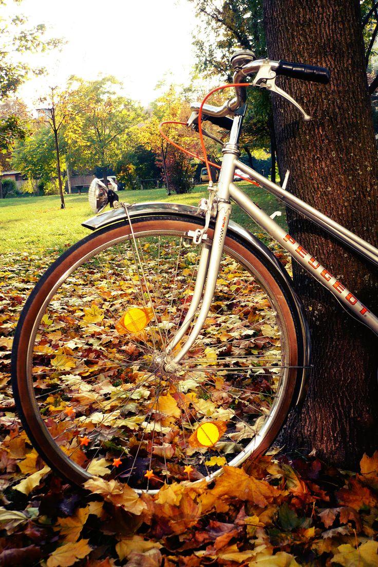 Peugeot bicycle autumn