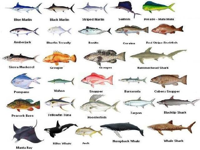 122 best costa rica fishing images on pinterest costa for Best saltwater fishing times