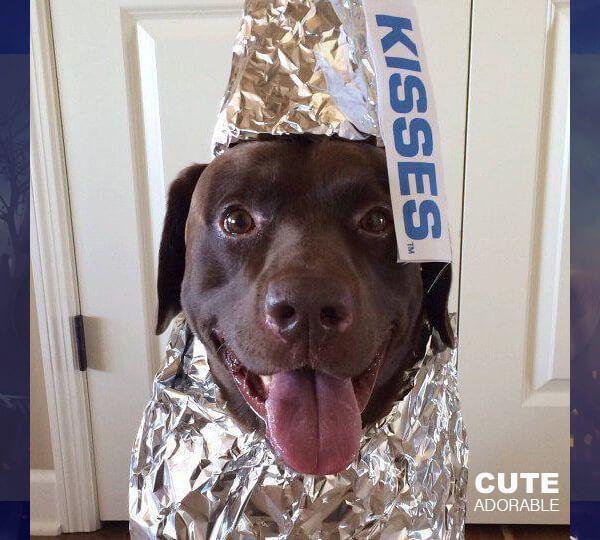 5 Cute Dog Costumes - Homemade Halloween Costume Ideas