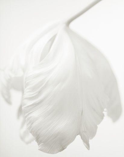 YUMIKO IZU PHOTOGRAPHY      SECRET GARDEN - BLANC  Blanc 56 Art Curator & Art Adviser. I am targeting the most exceptional art! Catalog @ http://www.BusaccaGallery.com