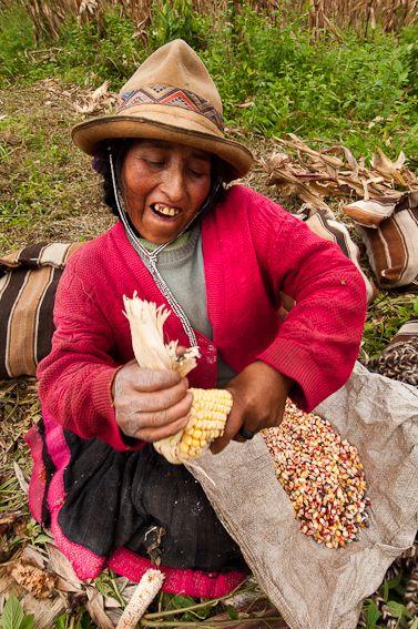 Q'ero qui épluche un épis de maïs, photo: TRANSHUMANCIAS VOYAGES
