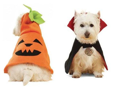 Disfraces de Halloween para perros | Decoración de Uñas - Manicura y NailArt