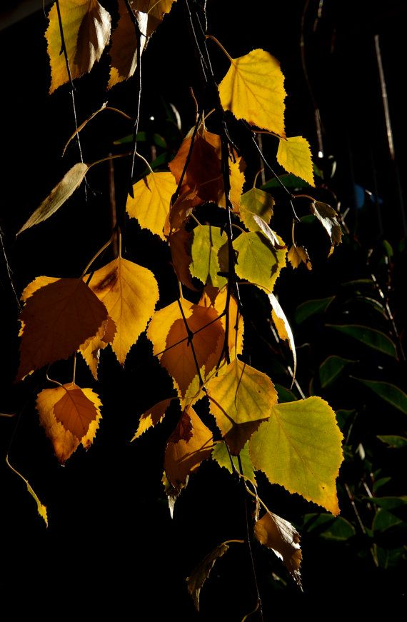 Autumn Leaves by GPNaturePhotos on Etsy, $45.00