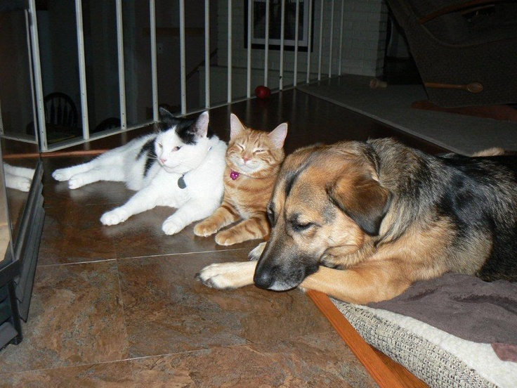 Winnie, Miss Kitty and Eddie in front of the fireplace. Miss Kitty is smiling!
