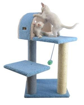 Fancy Kitten Furniture with Housee