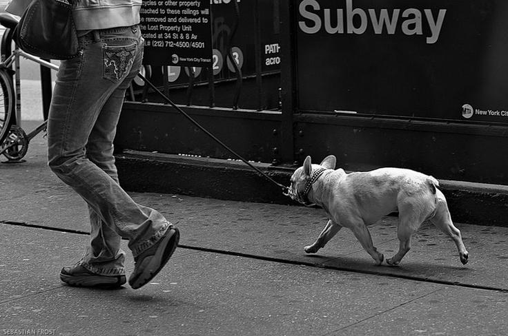 NY - photo by www.sebastianfrost.com