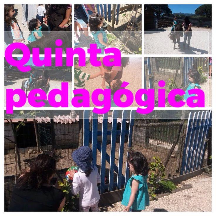 #QUINTA-CHACARA PEDAGÓGICA, ANIMAIS, PONEY, NATUREZA MUITO VERDE FESTINH...