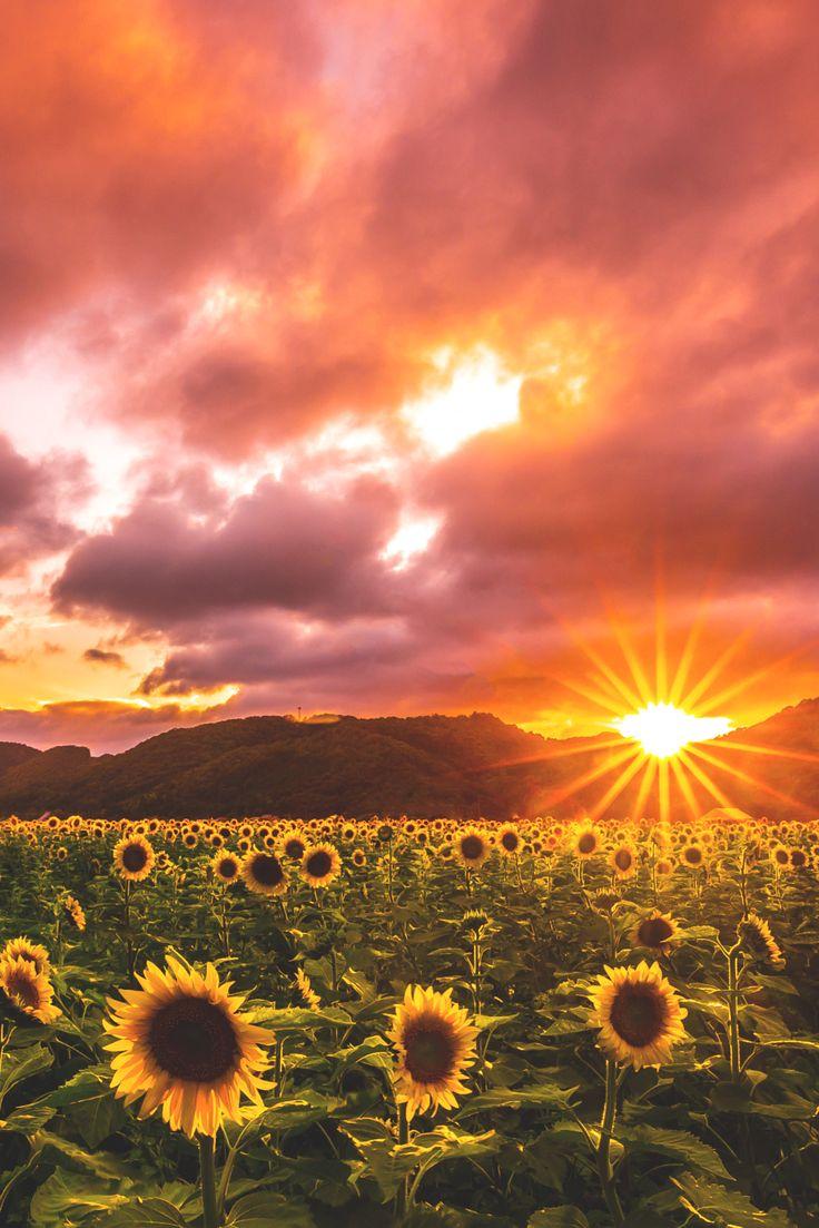 elvenlake:  Field of Suns