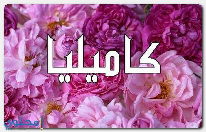 معنى اسم كاميليا Kamellia وصفات شخصيتها معاني الاسماء Camellia Kamellia Logos Adidas Logo