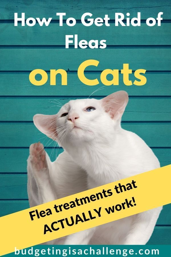 How To Get Rid Of Fleas In A House Fast Budgeting Is A Challenge In 2020 Fleas Money Saving Tips Cat Fleas