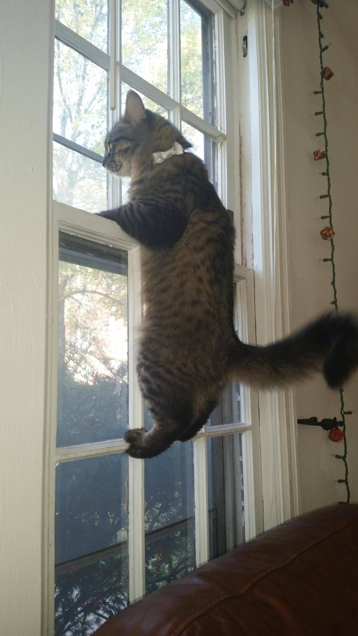 Cute kittens are fun — He likes to watch the birds outside.