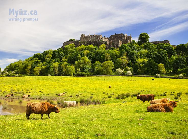 """This bucolic image of Scottish cattle in a field below Stirling Castle is your second muse in the creative writing eBook titled """"Archer"""""""