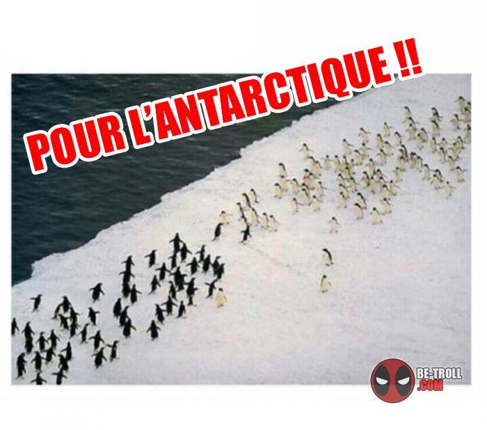 Pour l'antarctique !! - Be-troll - vidéos humour, actualité insolite