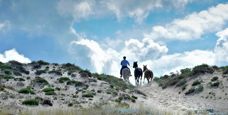 Cavalos na Areia, Comporta: See 54 reviews, articles, and 59 photos of Cavalos na Areia, ranked No.1 on TripAdvisor among 4 attractions in Comporta.