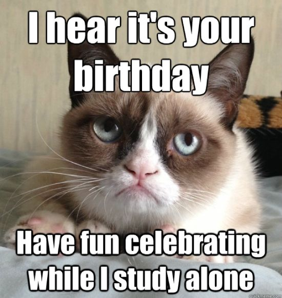 a810a7a5bc5d1ef57eb4a83be0a79038 birthday animals birthday cats 56 best grumpy cat birthday images on pinterest grumpy cat, funny