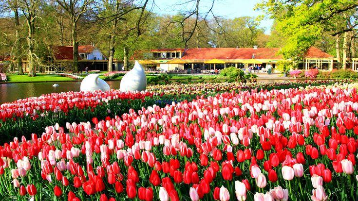 Keukenhof, tulips, Holland, Netherlands - Copyright: www.globalmousetravels.com