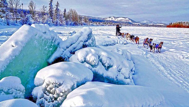 Es geht um die Schlittenhunde und Hundeschlitten in Alaskas Golden Heart City. Mit einer langen Dogmushing-Tradition ist es kein Wunder, dass Fairbanks zu einem Mekka dafür geworden ist.#yukonquest