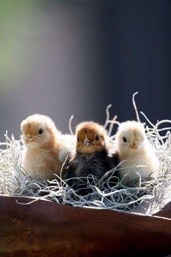 I'm the cutest! No, I am! No, I am! We'll take all three.