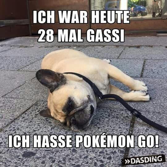 Meine Deutsch ist nicht gut, but it's obvious this dog hates pokemon go.