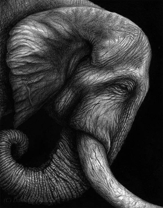 """""""Harness"""" An African elephant portrait done by Danielle"""