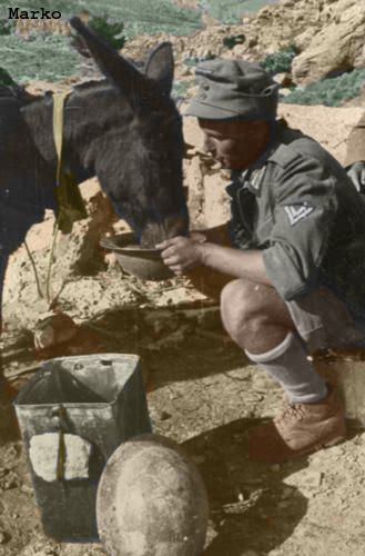 """German soldier waters his mule from discarded British """"Brodie"""" helmet following the capture of Crete."""
