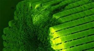Cada una de las púas de un erizo de mar se compone en un 99,9 por ciento de caliza, un material muy común que forma cristales diminutos que son muy duros, pero que se rompen con facilidad. Se ha descubierto ahora cómo estos animales marinos usan caliza o cal para formar las púas que los caracterizan, combinando esta dureza con una flexibilidad que dota a la estructura de una notable resistencia a los golpes. + info: http://www.ecoapuntes.com.ar/2012/03/el-asombroso-material-de-los-erizos/